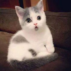 котэ,прикольные картинки с кошками,испуг,песочница
