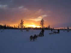 Mushing above the Arctic Circle, Swedish Lapland
