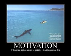 funny shark quotes | if you want to reach your goal just focus and