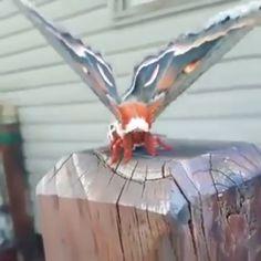 Giant Cecropia Silk Moth 🔥 🔥 - Niedliche tiere - Animal world Interesting Animals, Unusual Animals, Beautiful Bugs, Beautiful Butterflies, Amazing Nature, Cute Funny Animals, Cute Baby Animals, Nature Animals, Animals And Pets