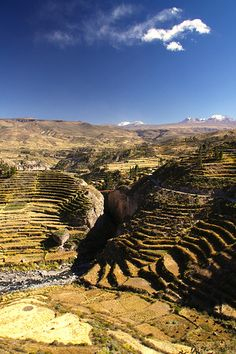 Agricultural terraces, Chivay River Valley, Arequipa, Peru