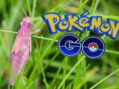 INSECT lovers will be delighted to see a rare PINK grasshopper has been spotted in Britain.