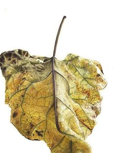Zoom in on the exquisite details of Jess Shepherd's hyperrealistic renderings of fallen leaves. The botanical painter plans to create a book of her illustrations, which are all based on leaves found. Botanical Drawings, Botanical Prints, Watercolor Leaves, Watercolor Paintings, Deco Floral, Painted Leaves, Community Art, Flower Art, Book Art