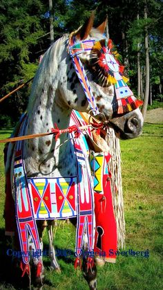 White Wolf : Amazing Native American Nez Perce Horse Regalia by Angela Swedberg, Quillwork Artist Pictures) Native American Horses, Native American Regalia, Native American Beauty, Native American Beadwork, Native American History, Appaloosa, All The Pretty Horses, Beautiful Horses, Horse Gear