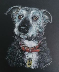 Portrait of a cute terrier type dog with a whimsical expression. Soft pastels on black paper.