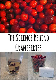 The science behind cranberries. Fun science activity for kids about what cranberries and Ivory soap have in common. Preschool Science, Science Experiments Kids, Science For Kids, Science Projects, Life Science, Science Table, Preschool Cooking, Science Party, Preschool Class