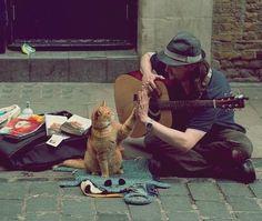 gatos-carinhosos-13
