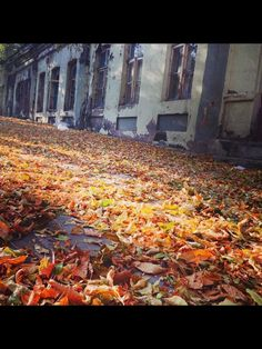 Sonbahara ait son kalintilar #Autumn #Kars #Turkey #Sonbahar