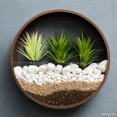 Create a stunning centerpiece for any room with our round wall vases. These vases are great for growing succulents and indoor plants, and will add color and glam to any wall in your house. Combine different sizes to create your own custom design. Wall Terrarium, Hanging Terrarium, Hanging Planters, Metal Planters, Flower Wall, Flower Vases, Flower Pots, Wall Flowers, House Plants Decor