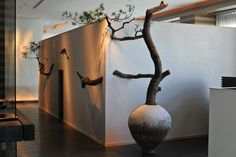 Branch art/bonsai/installation