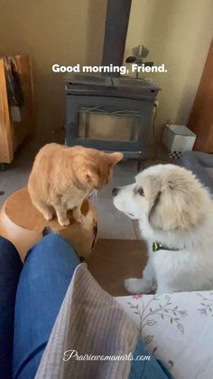 Our great pyrenees puppy has loved our old yellow cat, Gus, since day 1 of being in our house. I'm sharing this today, for anyone who might need a smile. Pyrenees Puppies, Great Pyrenees Puppy, Yellow Cat, Dog Toys, Good Morning, Kawaii, Smile, Cats, Sweet