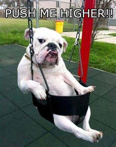 Dog Swing