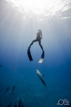 Freediving Photography - Freediving with Hawaiian Spinner Dolphins. Photo taken on one breath by Eusebio Saenz de Santamaria. Underwater Photos, Underwater Photography, Diving Course, Fishing Photography, Snorkelling, Koh Tao, Big Island, Scuba Diving, Padi Diving