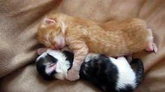 TV & ΔΙΑΦΗΜΙΣΗ: Δύο αξιολάτρευτα γατάκια αγκαλιά που έχουν σπάσει ...