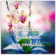 TweetVous imaginez qu'une orchidée, c'est compliqué à cultiver ? Eh bien vous vous trompez. Cette plante tropicale, avec ses fleurs aux formes fantastiques, est pourtant assez rustique et résistante. Pour bien entretenir une orchidée, il suffit de lui...