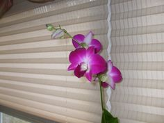orchid in living room