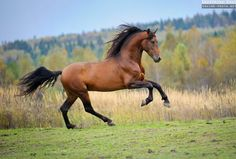 Photos of Andalusian horses by Ekaterina Druz Equine Photography