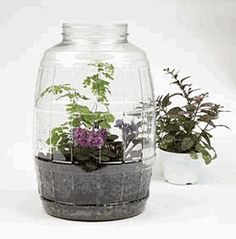 Terrarium Kit    GWK Exclusive! A low maintenance way to incorporate plants into your classroom, our Terrarium Kit engages and teaches kids about the water cycle. Using this well-conceived teaching tool, you can create a mini-biosphere and demonstrate the principles of evaporation, condensation, and precipitation. The kit includes a plastic 2-1/2-gal container, gravel, soil, background information and classroom activities, and a water cycle reproducible. Simply add your favorite plants (not…