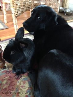 Bunny and his dog friend are two of a kind - May 6, 2014