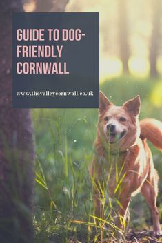 If you want to go on holiday and take your dog, Cornwall offers an incredible range of attractions, beaches and restaurants that are dog-friendly! Things To Do In Cornwall, Cornwall Cottages, Holidays In Cornwall, Going On Holiday, Days Out, Dog Friends, Cool Places To Visit, Cosy, The Good Place
