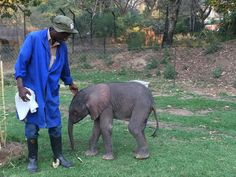 Ziwa with ZEN elephant keeper Paradzai Mutize at Zimbabwe Elephant Nursery