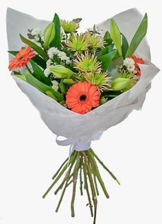 Gauteng Flower & Gift Delivery for all occasions. Whether you are looking for luxury or budget, our flower shops have what you are looking for. Gift Delivery, Green, Flowers, Plants, Gifts, Presents, Plant, Favors, Royal Icing Flowers