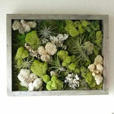 My New Favorite Thing- A Vertical Wall Garden using Air Plants and Reindeer Moss! I think I'd use many different colors of the reindeer moss though! Moss Wall Art, Moss Art, Green Garden, Garden Art, Moss Decor, Air Plant Display, Hanging Pots, Air Plants, Garden Inspiration