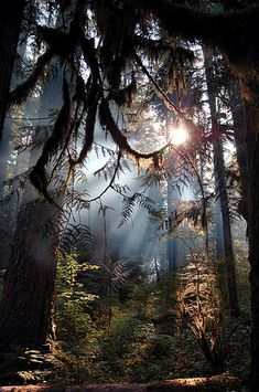fern laced forest light