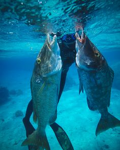Fishing with me, Cave Diving, Going Fishing, Ocean Life, Underwater, Navy, Spear Fishing, 3d Printing, Gun, Tech