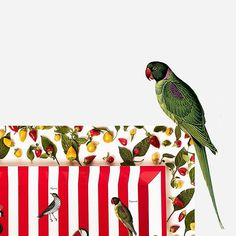 Luxury lacquered tray | POISON | Parrot view | CÔCO GIN | Serving tray | Luxury | BUTLERS TRAY