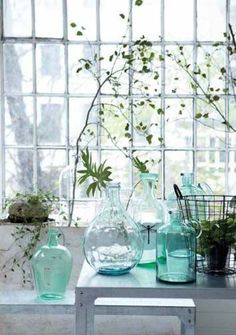 Blue Glass, Green Plants - Lots of Light