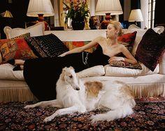Gorgeous.. Ralph Lauren Borzoi-love.
