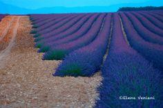 provence landscape #lavanda #provenza