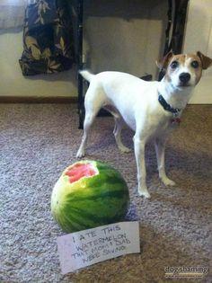 Watermelon Thief