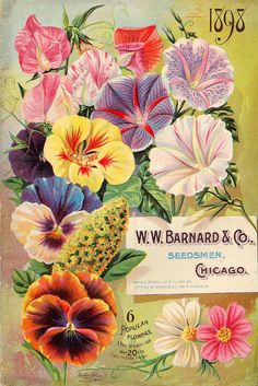 ~ Vintage Seed Catalogs depicting Pansies, courtesy Smithsonian Institution