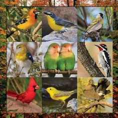Songbird Symphony, a 500 piece jigsaw puzzle by Springbok Puzzles.