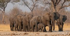 We are first and foremost African safari specialists. We are also a travel company with a difference; our partners include professional Pan-African safari guides whose knowledge, experience and passion infuse every one of our safaris. African Elephant, African Animals, African Safari, Lets Run Away, Long Way Home, Out Of Africa, Travel Memories, Dream Vacations, Where To Go