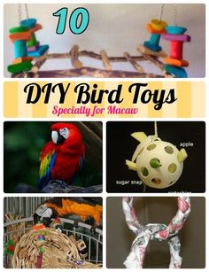 10 Most Simplest Ideas of DIY Toys for Macaws. Easy Diy Toy crafts for Birds to Keep those cute beaks engaged and Macaw Bird coloring pages for kids.