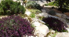 White rock garden with green and purple colors- fehér sziklakert zöld és lila növényekkel