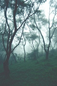The mist makes everything more beautiful.