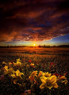 ✯ Drifting by Phil Koch