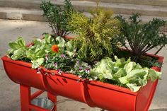 East Tennessee Discovery Center: Planters Made from Recycled Oil Drums