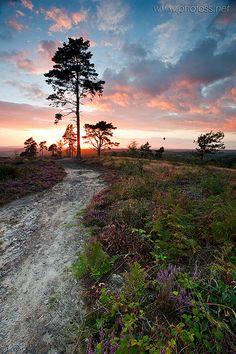 path in South Downs National Park, West Sussex, England | Slawek Staszczuk