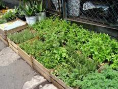 Shade-Loving Herbs | DIY Garden Projects | Vegetable Gardening, Raised Beds, Growing & Planting | DIY