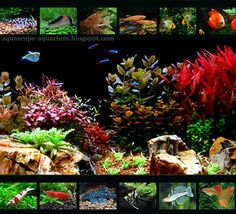 Freshwater Tropical Fish Species for Planted Aquarium - Aquascape Aquarium - Freshwater Aquarium Plants for Beginners