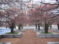 South Garden at the Art Institute of Chicago by Dan Kiley.