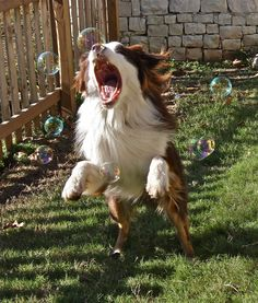 """Dogs: """"BUBBLES!!"""" 