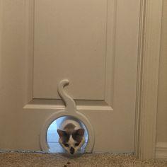 Door Design Interior, Pet Door, Solid Doors, Dog Rooms, Florida Home, Exterior Doors, Easy Install, Door Handles, Cats