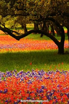 Texas Wildflowers: See some of these magnificent displays on Classic Adventures' Texas Hill Country cycling tour.
