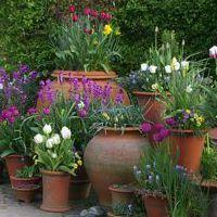 Whichford Pottery~ Courtyard Garden